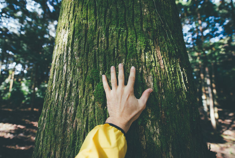 Cropped hand of person touching tree at forest