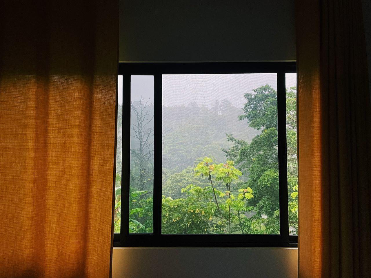 PLANTS SEEN THROUGH WINDOW OF HOUSE