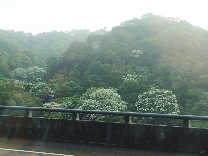 Travel Destinations May Snow Taiwan On The Way To The Airport Nature Tree Mountain Beauty In Nature Tranquility Photography In Motion From The Cab Cab Photograhy Beautiful Nature