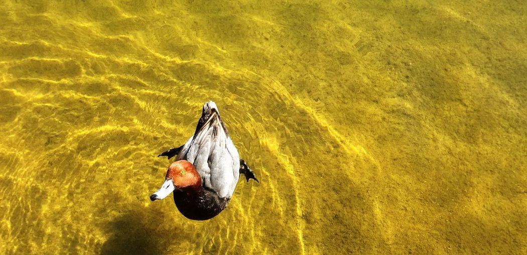 High angle view of swan on lake