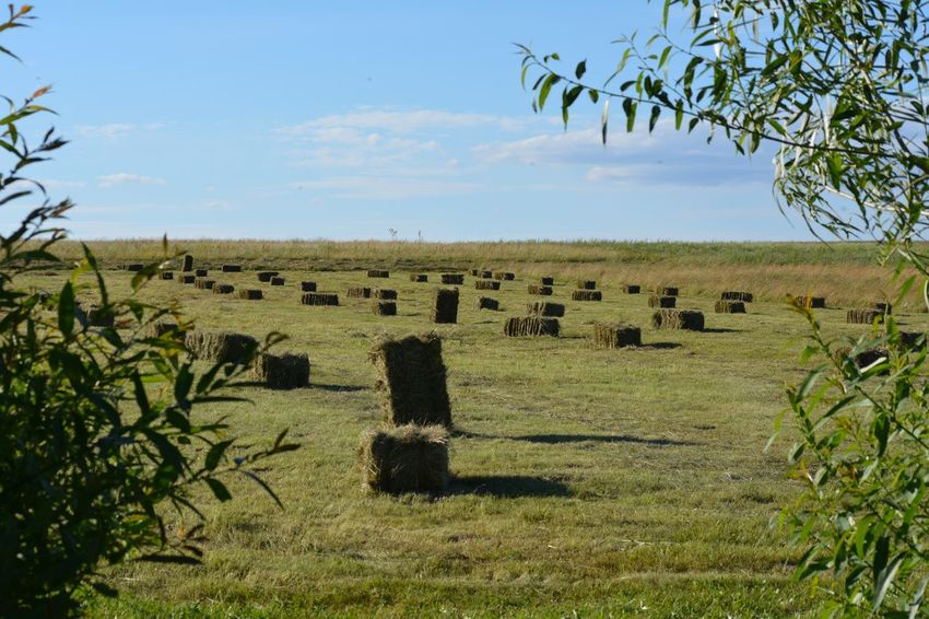 Hay bales Landscape Tranquil Scene Nature Hay Bale  Trees Leaves Green Countryside Agriculture Frame Meadow