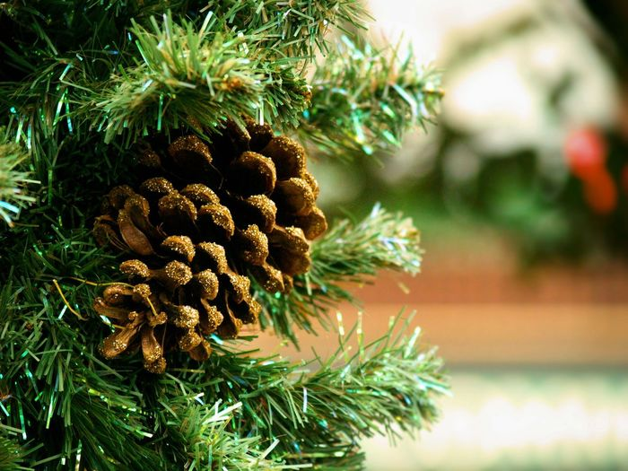 Close-up of pine cone on christmas tree