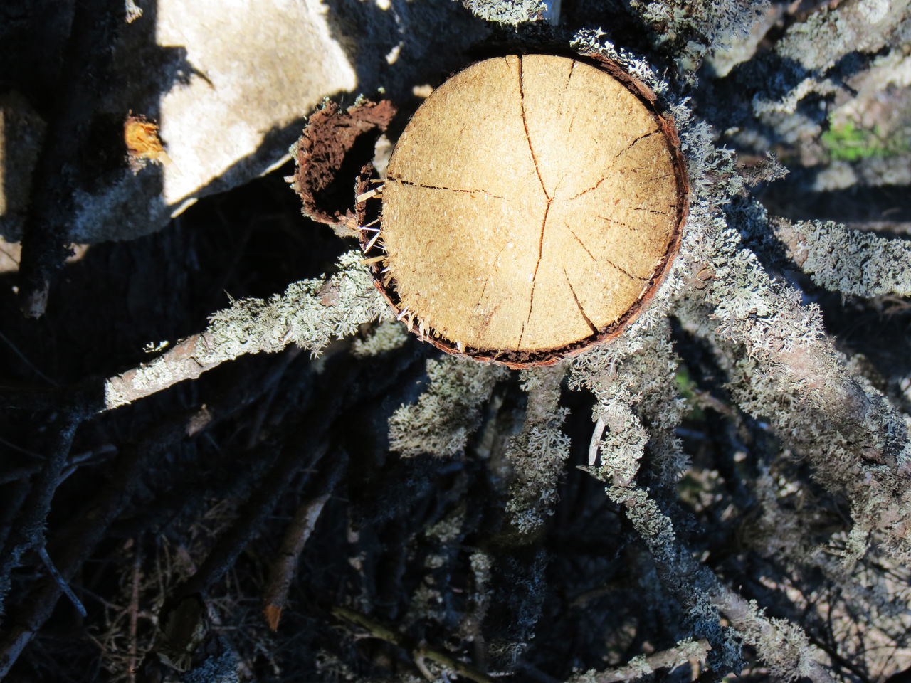 log, deforestation, lumber industry, leaf, nature, close-up, day, timber, outdoors, no people, textured, tree ring, forestry industry, beauty in nature