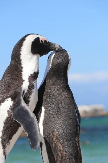 Close-up of penguins against sky