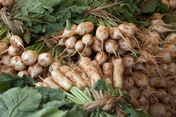 Dikon radishes for sale at market
