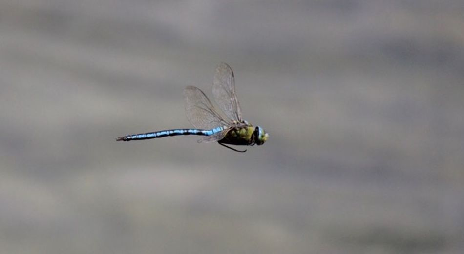 Insect Dragonfly One Animal Animal Themes Invertebrate Insect Animal Animal Wildlife Animal Wing
