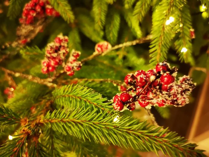 Berries on a Christmas tree Tree Flower Pine Tree Pinaceae Red Close-up Plant Green Color Pine Cone Blooming Needle - Plant Part Christmas Ornament christmas tree Tree Topper