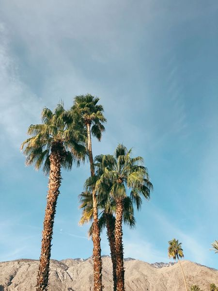 Palm Springs Palm Trees Palm Tree Tree Sky Nature Beauty In Nature Tranquil Scene Low Angle View Day Tranquility Cloud - Sky Scenics No People Outdoors California Dreamin