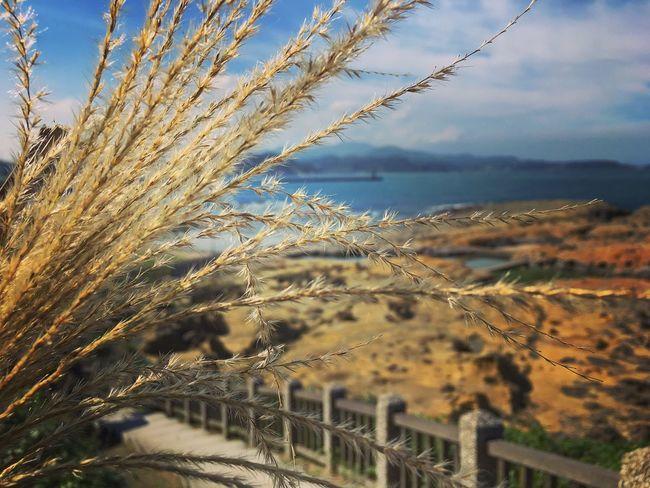 涉影.Photography IPhone 6s Plus IPhone 6s+ Iphoneonly Iphonegraphy Iphonephotography Relaxing Enjoying Life Sea Nature Sky