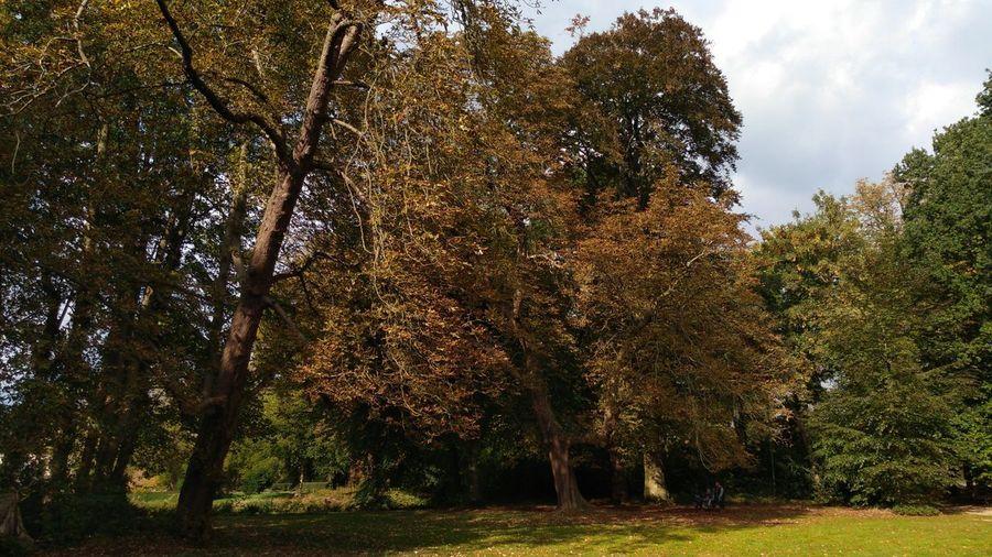 Autumn's Arrival. Autumn Tree Sky Tree Area Woods WoodLand Tranquil Scene Calm Forest
