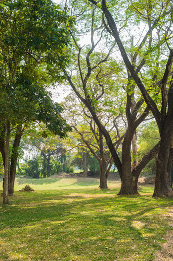 Tree Plant Grass Green Color Beauty In Nature Nature Landscape No People Tranquility Day Scenics - Nature Tranquil Scene Tree Trunk Sunlight Environment Land Park Trunk Outdoors Park - Man Made Space WoodLand