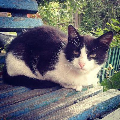 Бесконечно ласковый кот Володя