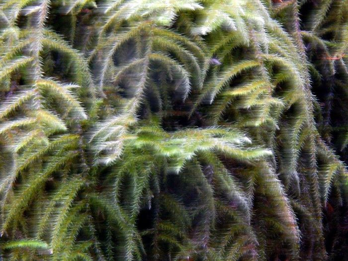 Fern Growth No People Nature Full Frame Plant Day Close-up Movement Outdoorsrs ] Beauty In Nature outdoorsUnderSeaa