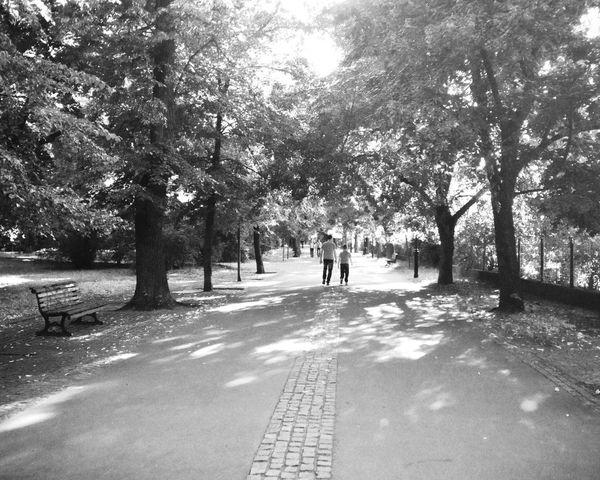 walking through the park IPhoneography Blackandwhite Prague Czech Republic