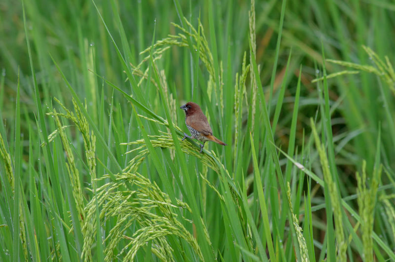 Bird perching on grass in field