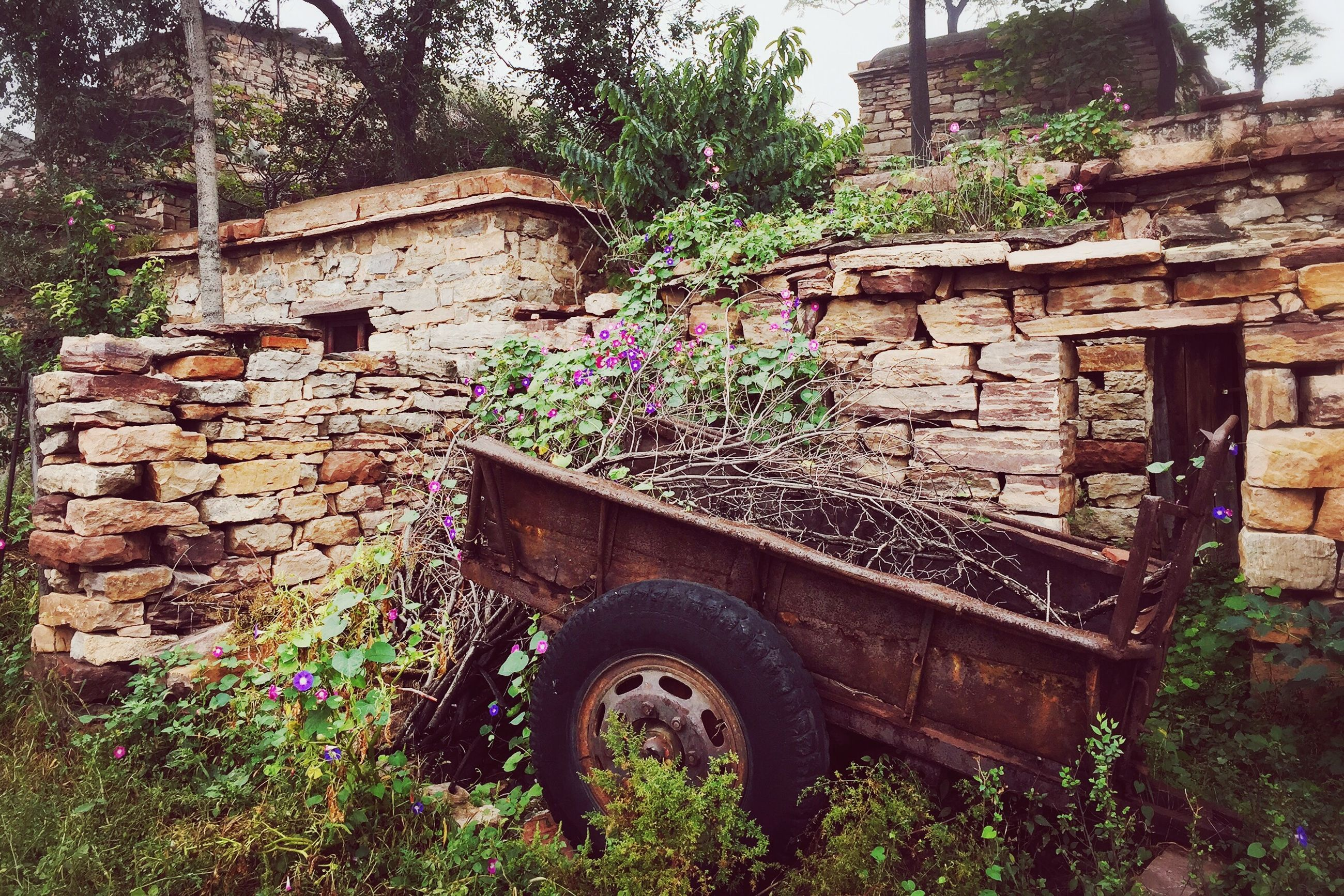 architecture, built structure, building exterior, stone wall, brick wall, old, plant, tree, house, wall - building feature, arch, abandoned, growth, obsolete, day, steps, deterioration, outdoors, wall, building