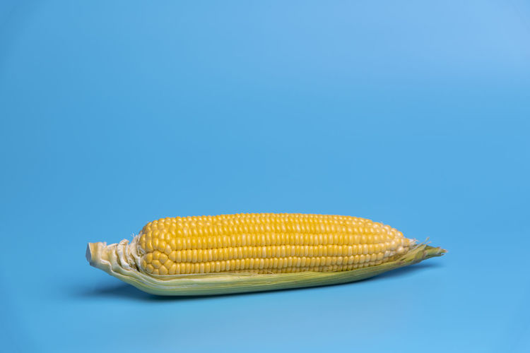 Sweetcorn Against Blue Background
