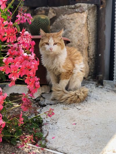 Mammal Animal Animal Themes One Animal Domestic Cat Cat Domestic Animals Flower Flowering Plant Feline Pets Plant Domestic Vertebrate Sitting No People Nature Day Portrait Looking At Camera