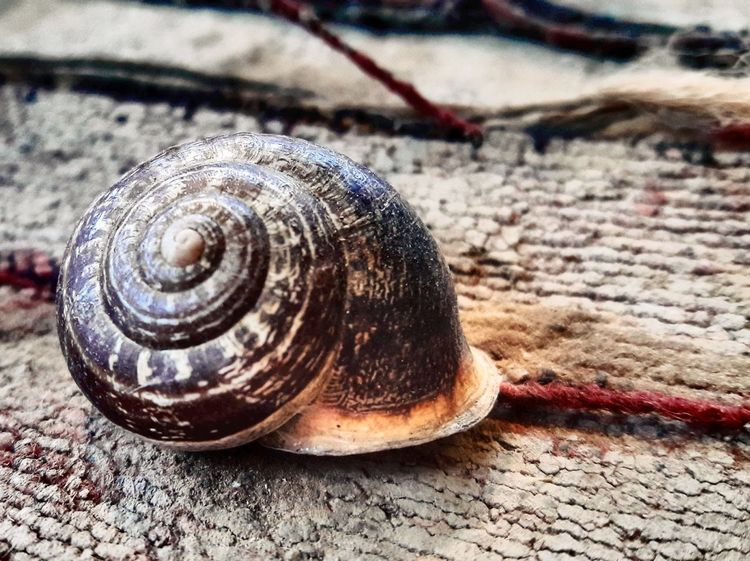One Animal Snail Animal Themes Close-up Nature Animals In The Wild No People