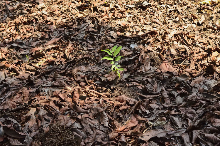 Green Color Hope Beauty In Nature Fight For Life Growth Nature No People Outdoors Plant Reborn Of Nature Special Survivor