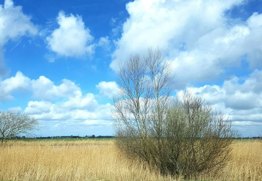 It's gonna be a hard day work Cloud - Sky Nature Tree Outdoors Water Sky Clouds Landscape Clouds And Sky Springtime Colours Of Nature Betterlandscapes Grass Tranquility Meadow Dutch Landscape Rural Scene On The Road Friesland Farmhouse Agriculture Day No People Beauty In Nature