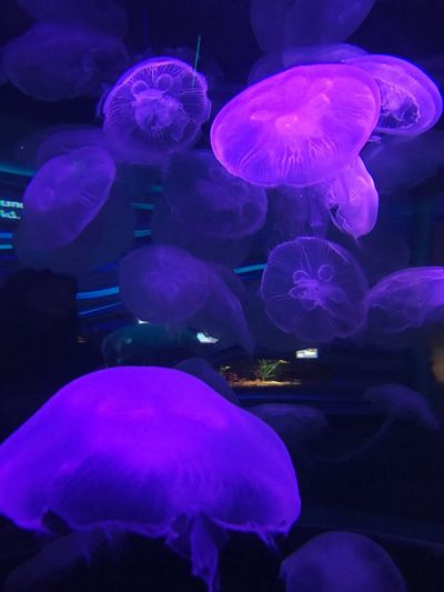 Sea Life Underwater Jellyfish Water Swimming Large Group Of Animals Group Of Animals No People Aquarium Animal Themes Animals In The Wild Floating In Water Animal Wildlife Indoors  UnderSea Beauty In Nature Nature Close-up L. Jeffrey Moore IPhone 7 Plus Illuminated Beauty In Nature UnderSea Nature HUAWEI Photo Award: After Dark