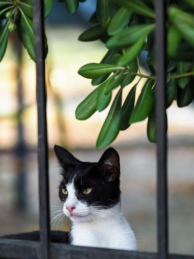 Kitty View Animal Animal Themes Cat Close-up Day Domestic Animals Domestic Cat Feline Focus On Foreground Green Color Leaf Mammal Nature No People One Animal Outdoors Pets Portrait Sceptical Look Streetphotography