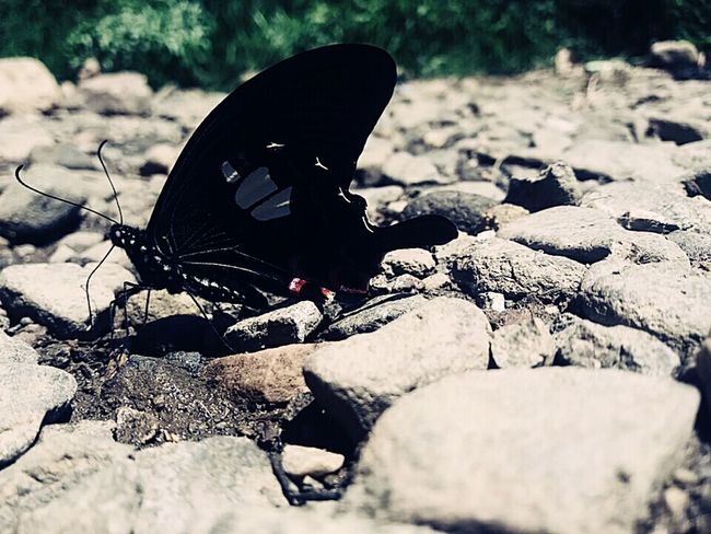 Beautiful Nature Black Butterfly Stones