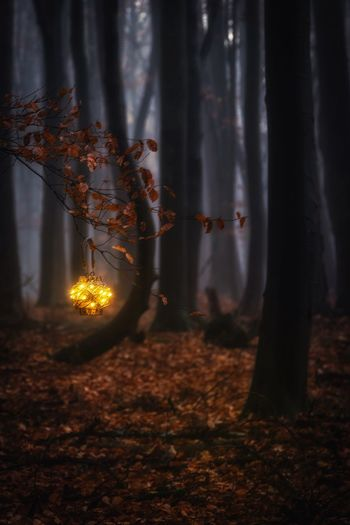 Illuminated lighting equipment hanging on tree in forest during autumn