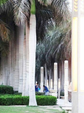 Palmtree Green AzharPark Relaxing Red Love♥ Egypt Egypt Cairo Romantic❤ Walking Around