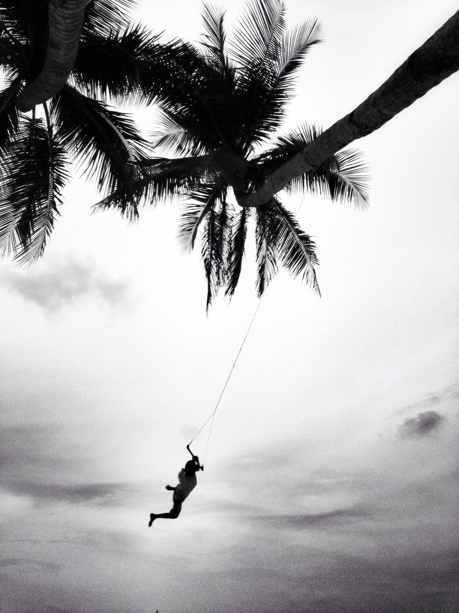 silhouette, tree, sky, palm tree, low angle view, transportation, nature, flying, mid-air, tranquility, mode of transport, leisure activity, beauty in nature, cloud - sky, day, outdoors, branch, tranquil scene