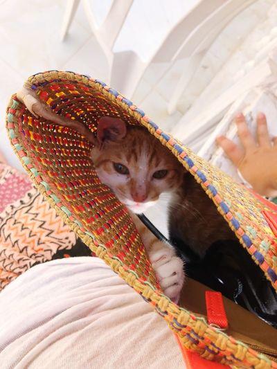 Cat in the bag Bag Cat