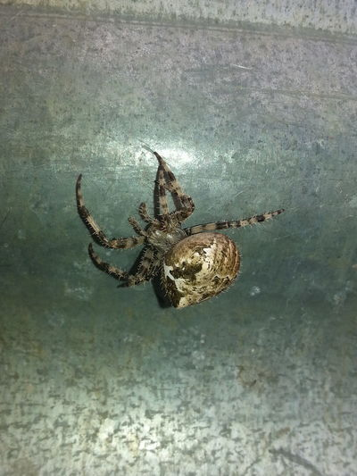 Creepy crawlers. Spider World Coolness Creepy Crawlers Check This Out