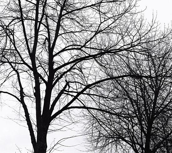 Wintered, Weathered, Wiltered Blackandwhite Eyeemphotography Eye4photography  Twenty20 Popular Photos Seasons EyeEm Best Shots Flowers,Plants & Garden Nature EyeEm Nature Lover EyeEm Best Shots - Black + White EyeEm Best Shots - Nature This Week On Eyeem Weather Trees TreePorn