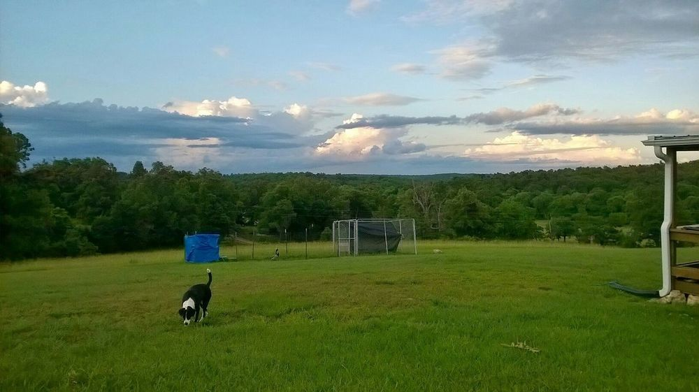Home Sweet Home Homesweethome Heaven And Earth Heaven Hello World Enjoying Life I Love My Dog Beautiful Country Life Farm Life Capturing Freedom Sky And Clouds Nature_perfection Beautiful Nature Taking Photos Cellphone Photography Tree And Sky