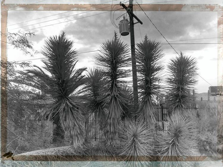 Architecture Auto Post Production Filter Close-up Cloud - Sky Day Electricity  Grass Growth Landscape Lighting Equipment Nature No People Outdoors Palm Tree Plant Sky Technology Transfer Print Tree Tropical Climate