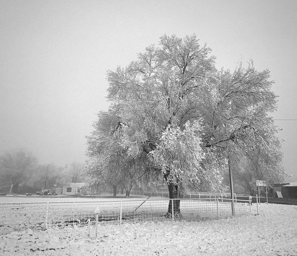"""Spring Surprise"" A surprise snowstorm hits the Central Highlands Of New Mexico and coats a tree in the tiny Village of Willard with its beautiful, soft essence. Black And White Photography Black & White Blackandwhite Spring Snow Snowstorm Snow Tree Nature Outdoors"