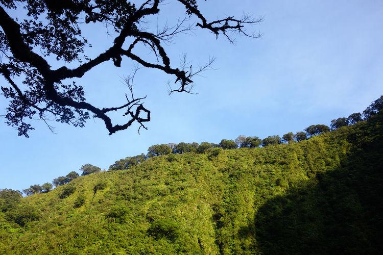 Mt. Mandalagan Philippines Northern Negros Natural Park Tree Valley Danao Silay City Adventure Trekking In Negros