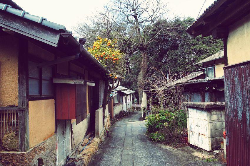 島の路地 愛媛県 今治市 大三島 Island Life Mandarin Oranges Alley しまなみ海道