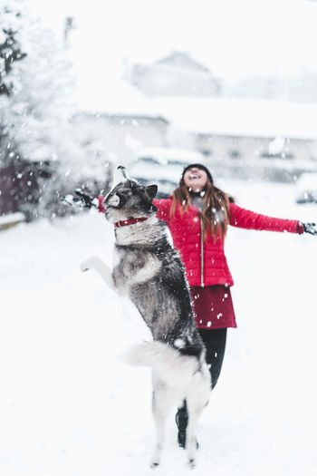 Husky Snow Cold Temperature Winter Warm Clothing One Person Clothing Canine Dog Real People One Animal Nature Young Adult Leisure Activity Pets Domestic Day Domestic Animals White Color Women Outdoors Snowing Extreme Weather