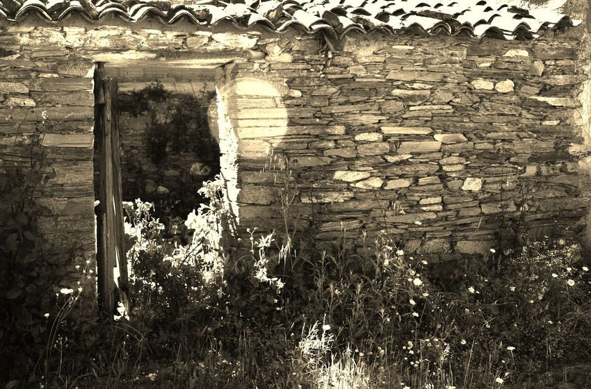 Ruins Black And White Photography Old Buildings Beautiful Day Portugal Countryside Portugal Is Beautiful Hot Days Tranquility Shadows Light And Shadow Hot Day Outside Beauty In Nature Tiled Roof  Doorway Light In Doorway Wild Flowers Beautiful Nature Portugal Flowers, Nature And Beauty Portuguese Village Flowers Old Ruin Old Ruins Hot Day Delicate Beauty
