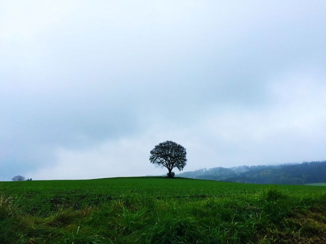 Ein einsamer Baum im Herbstdunst. Nature Natural Beauty Natural Tree Fog Fall Autumn Colors Of Autumn Fichtelgebirge