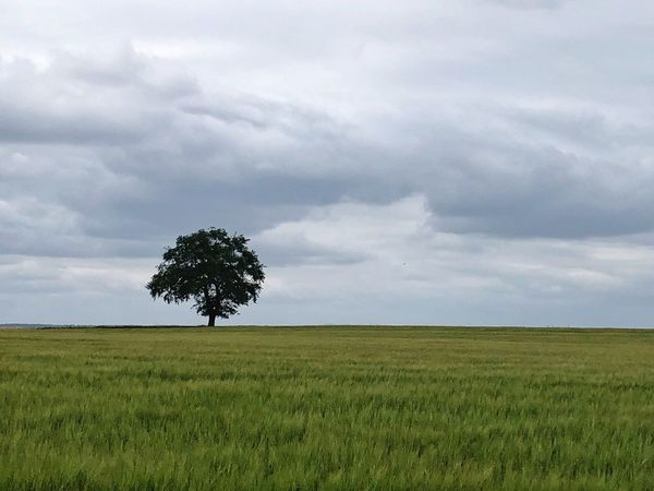 • Pure Nature • Plant Sky Land Landscape Environment Tree No People Grass Nature Rural Scene Green Color Tranquility Cloud - Sky Beauty In Nature Scenics - Nature Growth Horizon Tranquil Scene