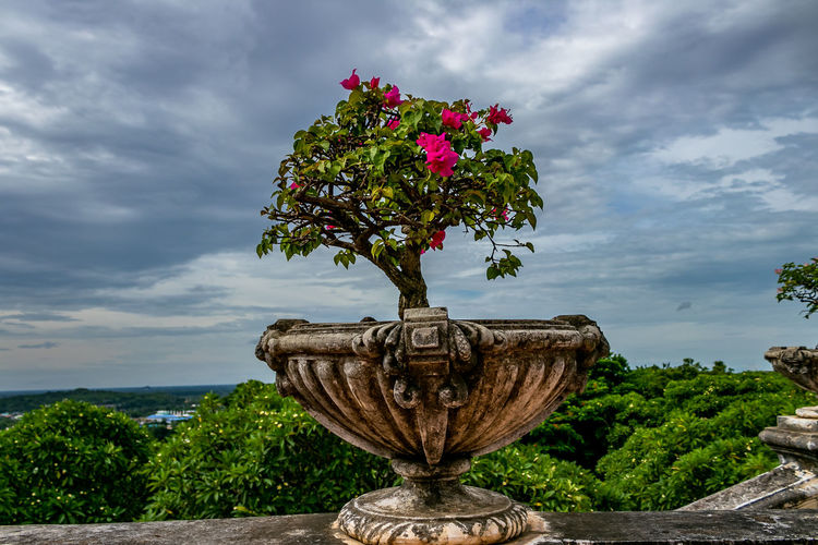 Flower pot at