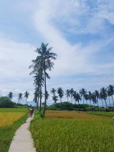 parh to masasa beach... Tree Agriculture Cloud - Sky Field Grass Social Issues Full Length Working Palm Tree Rice Paddy People Farmer Adult Nature Sky Outdoors One PersonEarth 🌏 Is Beautiful Mother Nature Sea Beach Backtonature Beauty In Nature Day Irrigation Equipment
