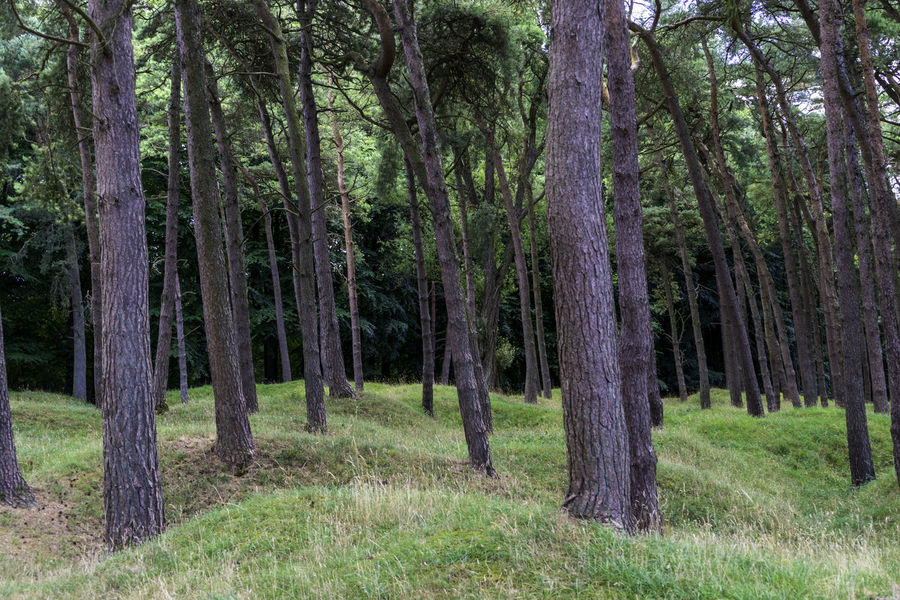 Day Forest Grass Landscape Nature No People Outdoors Tree Tree Trunk
