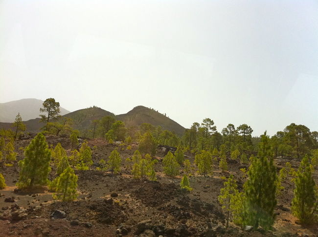 Canary Islands Day Distant Green Green Color Hill Landscape Lush Foliage Mountain Mountain Range Nature Non-urban Scene Outdoors Physical Geography Scenics Teide National Park Tenerife Tranquil Scene Tranquility Trip Vacation Valley Voyage