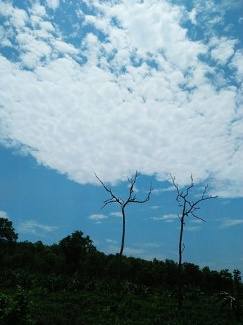 Tree Mountain Social Issues Water Rural Scene Sky Landscape Cloud - Sky