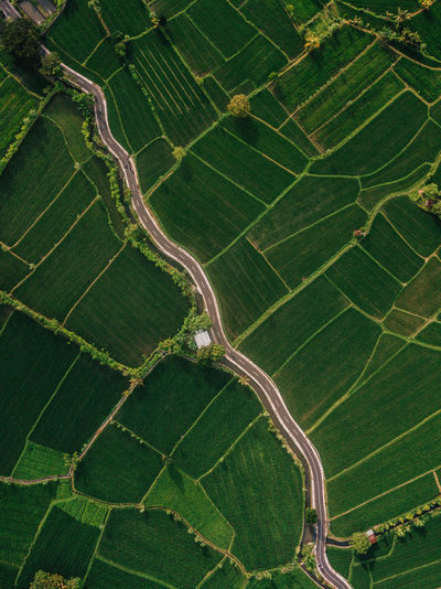 Aerial view of road and agricultural field