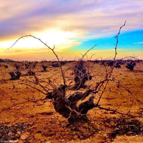 Tierras de Castilla la Mancha
